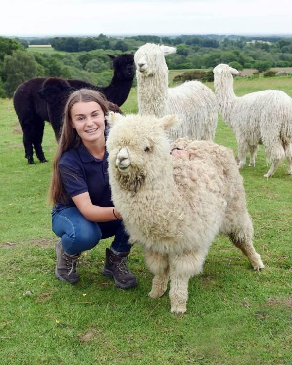 Meet the Alpacas on National Alpaca Open Farm Day