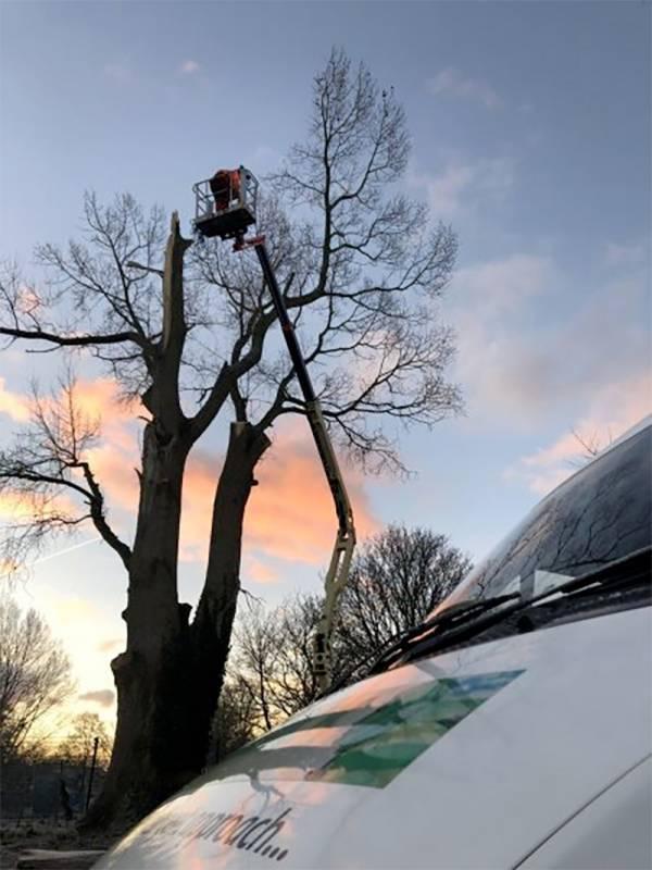 Tree surgeon up a tree on a cherry picker